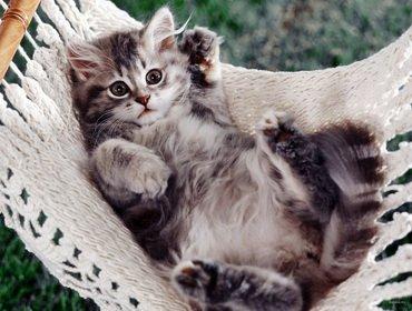 Мы берем с собой кота 2. Домашняя кошка на даче