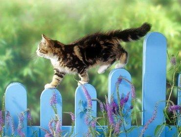 Мы берем с собой кота 1. Домашняя кошка на даче