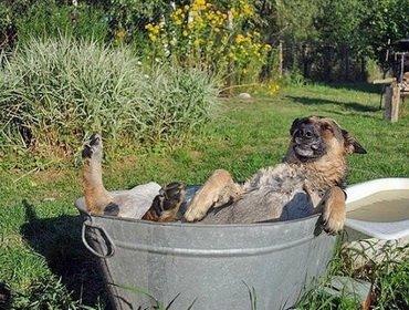 Проблемы у собаки на даче и их решения