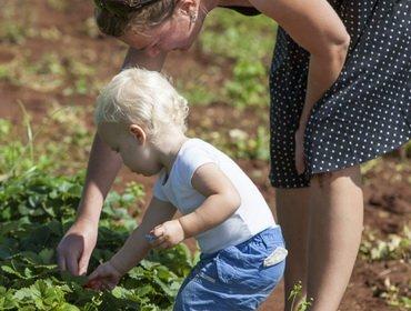 Дачный ботаник, делаем дачную детскую грядку