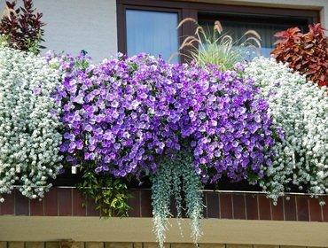 Цветущий балкон: секреты и правила успеха