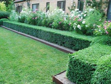 Живая изгородь на даче — создаем зеленую ширму