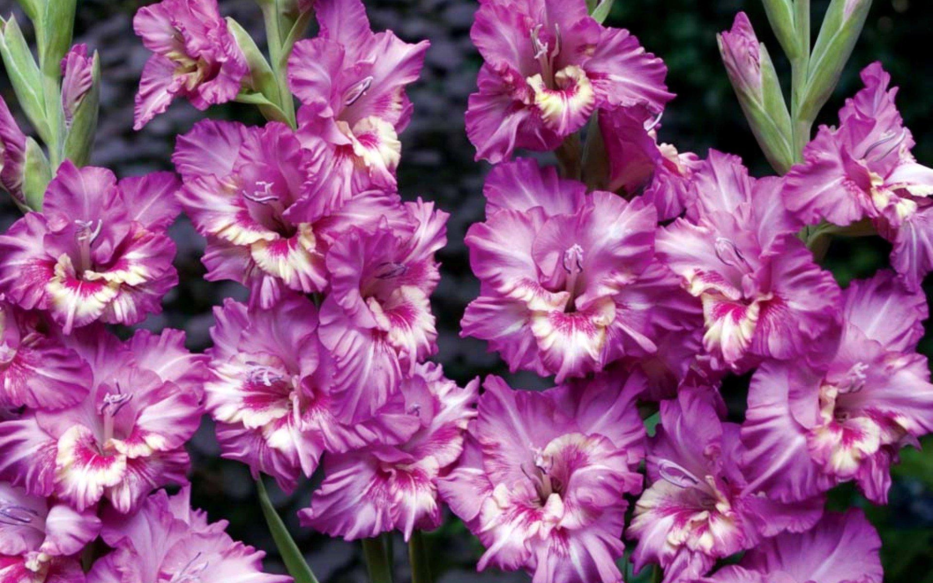 Цветы почтой в украине, цветы