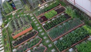 Дизайн грядок на огороде