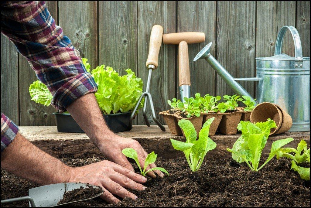 Органическое земледелие на даче с нуля (с видео)