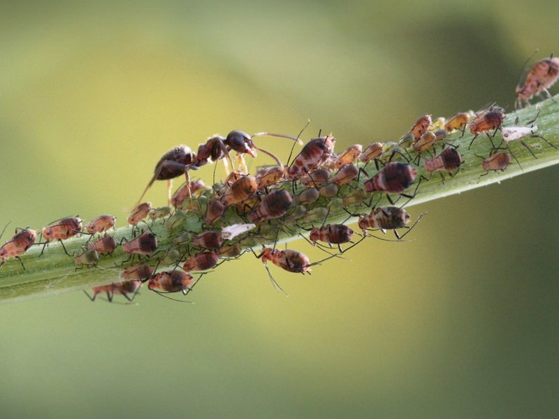 Народные средства борьбы с вредителями растений