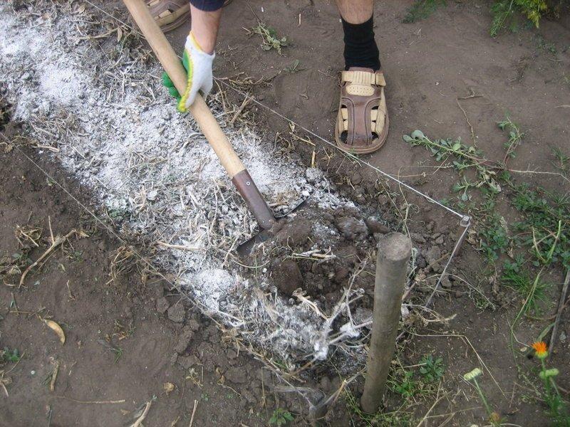 Какие и зачем вносят удобрения в почву: правильное внесение
