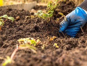 Как можно улучшить структуру почвы на участке