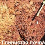 Улучшение глинистой почвы