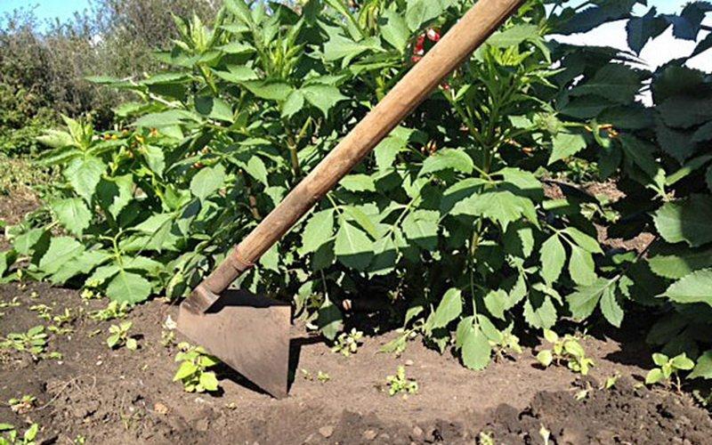 Суглинистая и глинистая почва: как улучшить свойства, качество и плодородие тяжелой почвы на участке