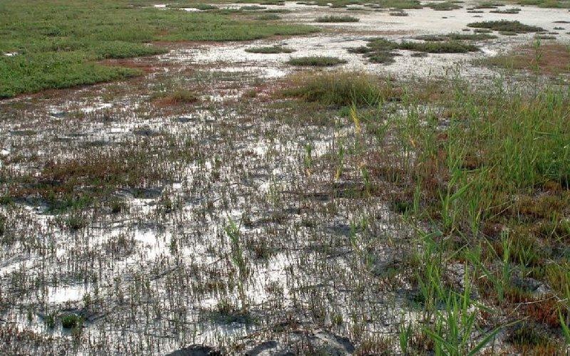 Причины вторичного засоления почв: почему происходит при орошении и борьба с ним