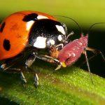 Полезные насекомые. Полезные насекомые – наши помощники