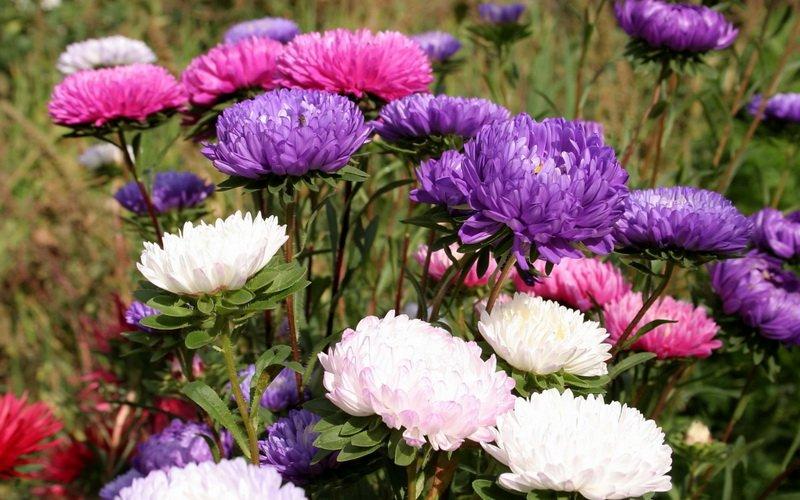 Обработка растений препаратами для борьбы с болезнями