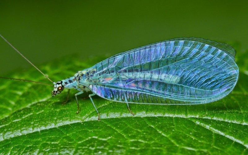 Чем полить растения от вредителей: препараты для борьбы с насекомыми