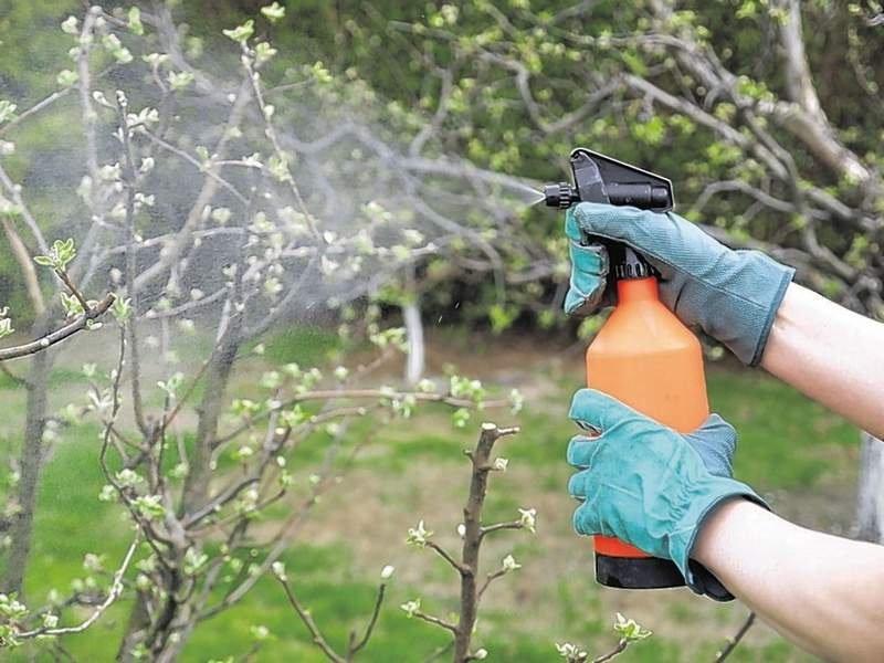 Опрыскать сад