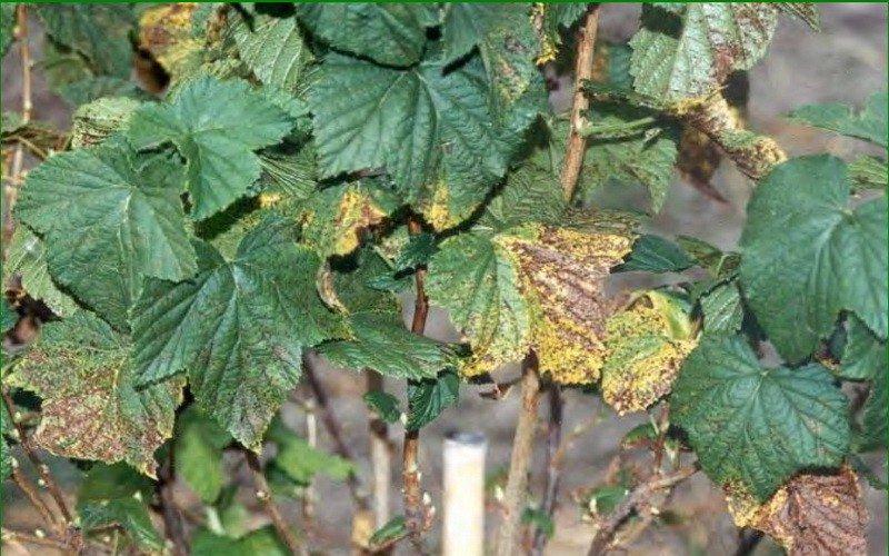 Чем опрыскать растения от болезней: препараты для защиты и лечения