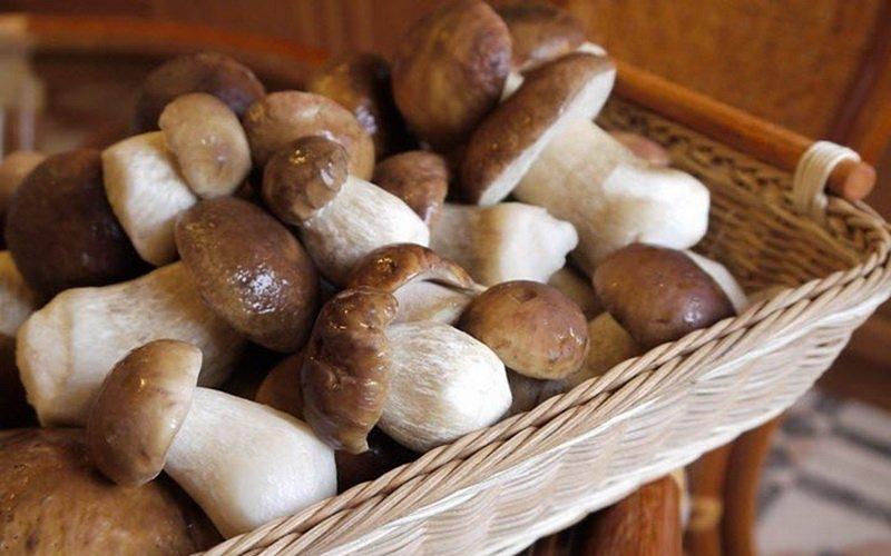 Еловые разновидности белых грибов (Boletus edulis f. edulis) с фото и описанием фото