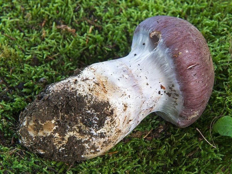 Картинка грибов съедобных и несъедобных грибов