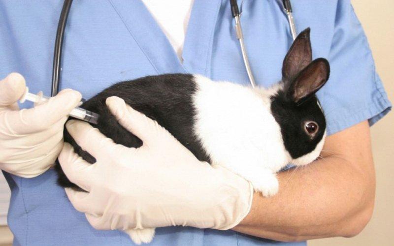 Как правильно сделать укол кролику и наложить повязку фото