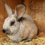 Болезни кроликов: симптомы, лечение, фото