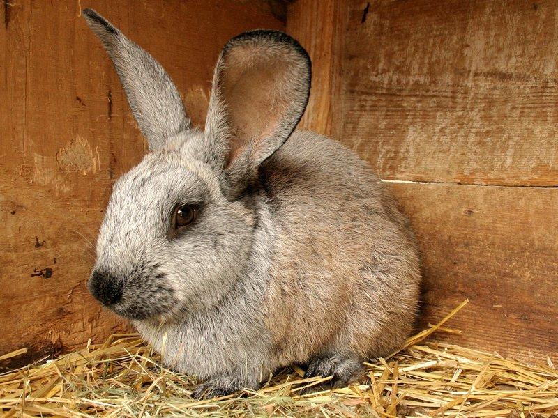 Первые признаки заболеваний у кроликов