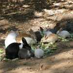 Чем кормить кролика веточный корм для кроликов