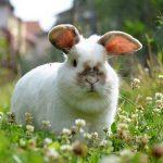 Состав корма для кроликов заготовка кормов