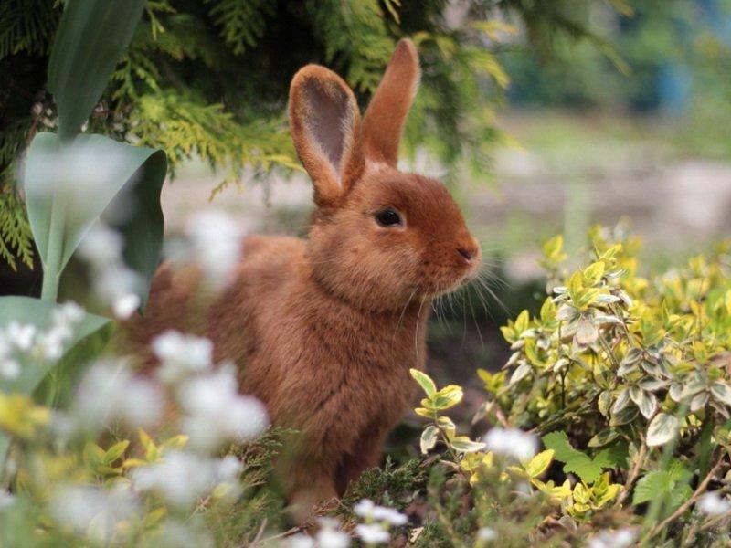 Трава корма для кроликов