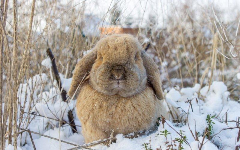 Приготовление веточного корма и как сделать минеральные добавки для кроликов