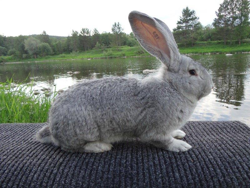 Кролик на фото