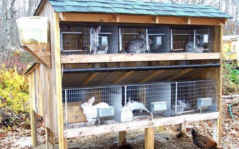 Как правильно содержать кроликов в клетках: карантин