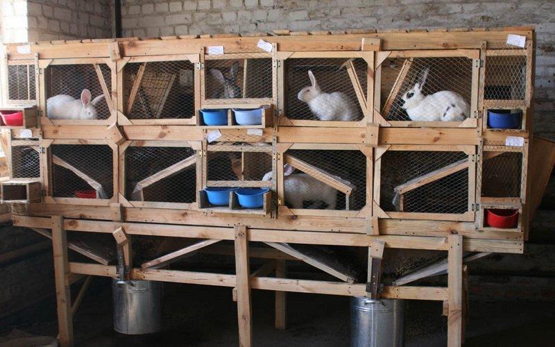 Стоимость клетки для кроликов