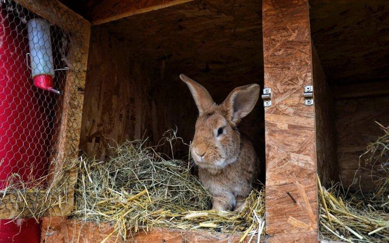 В каких условиях нужно содержать кроликов  фото