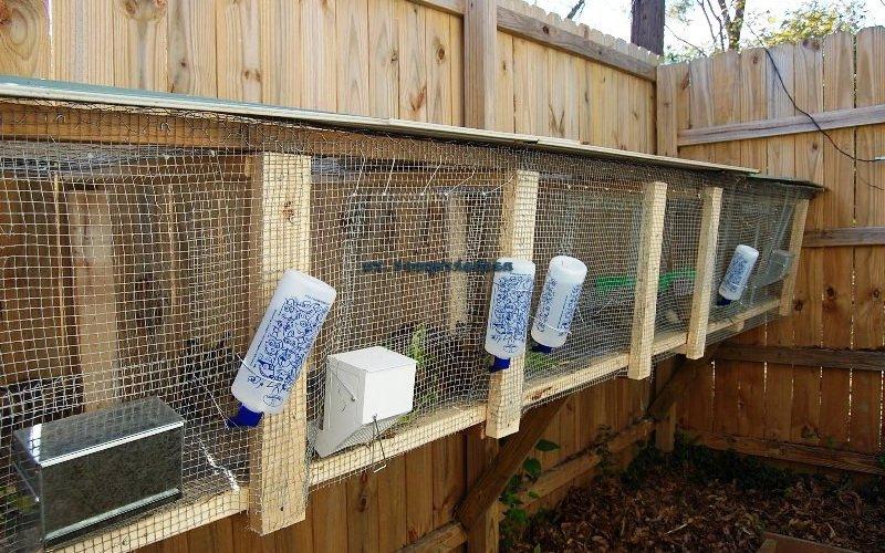 Правильное обустройство и размеры клеток для кроликов (с фото)