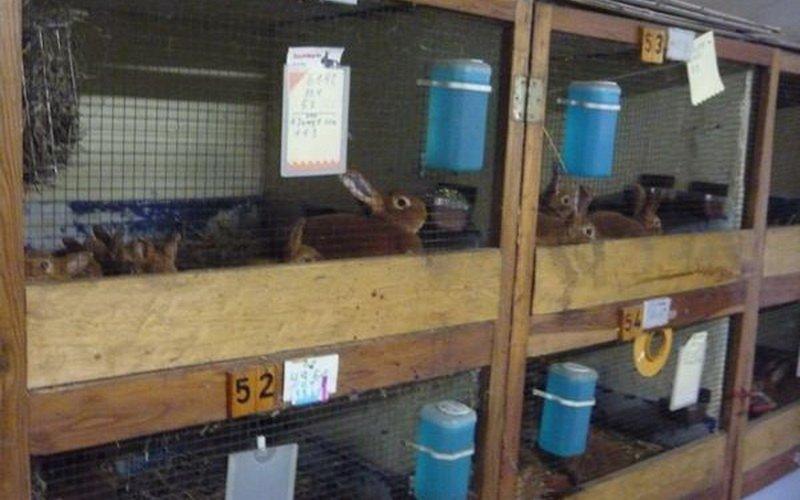 Правильное обустройство и размеры клеток для кроликов (с фото) фото