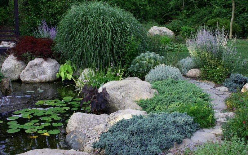Агротехника выращивания можжевельника в саду: посадка и уход