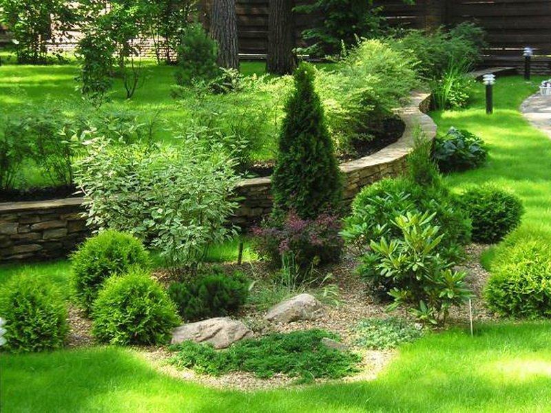 Декоративнолиственный кустарник туя