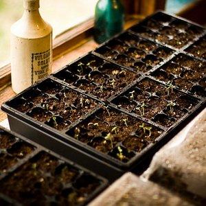 Высадка семян на рассаду в феврале