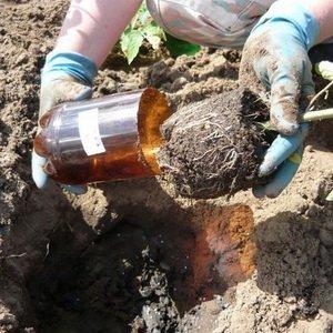 Высадка рассады растений в открытый грунт в мае