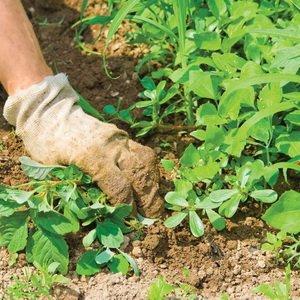 Важные работы в саду и на огороде в июне
