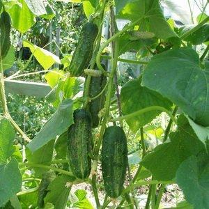 Чем ещё подкармливать растения в июле