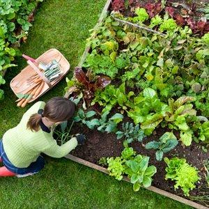 Работы в саду и на огороде в августе: подкормки и удобрения растений фото