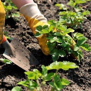 Посевной календарь садовода и огородника на сентябрь 2017 года