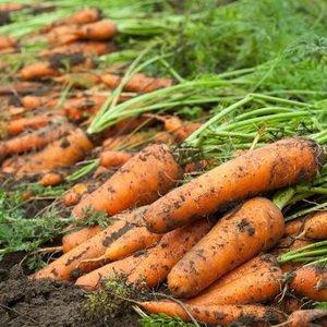 Месяц сентябрь – время сбора урожая
