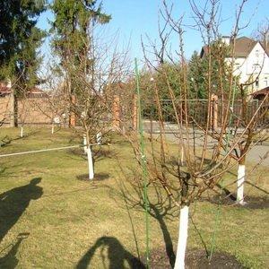 Какие работы нужно делать в саду и огороде в октябре