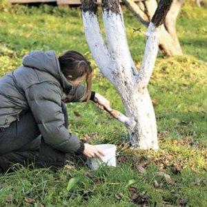 Какие осенние работы нужно выполнить в саду и огороде в ноябре (с видео)