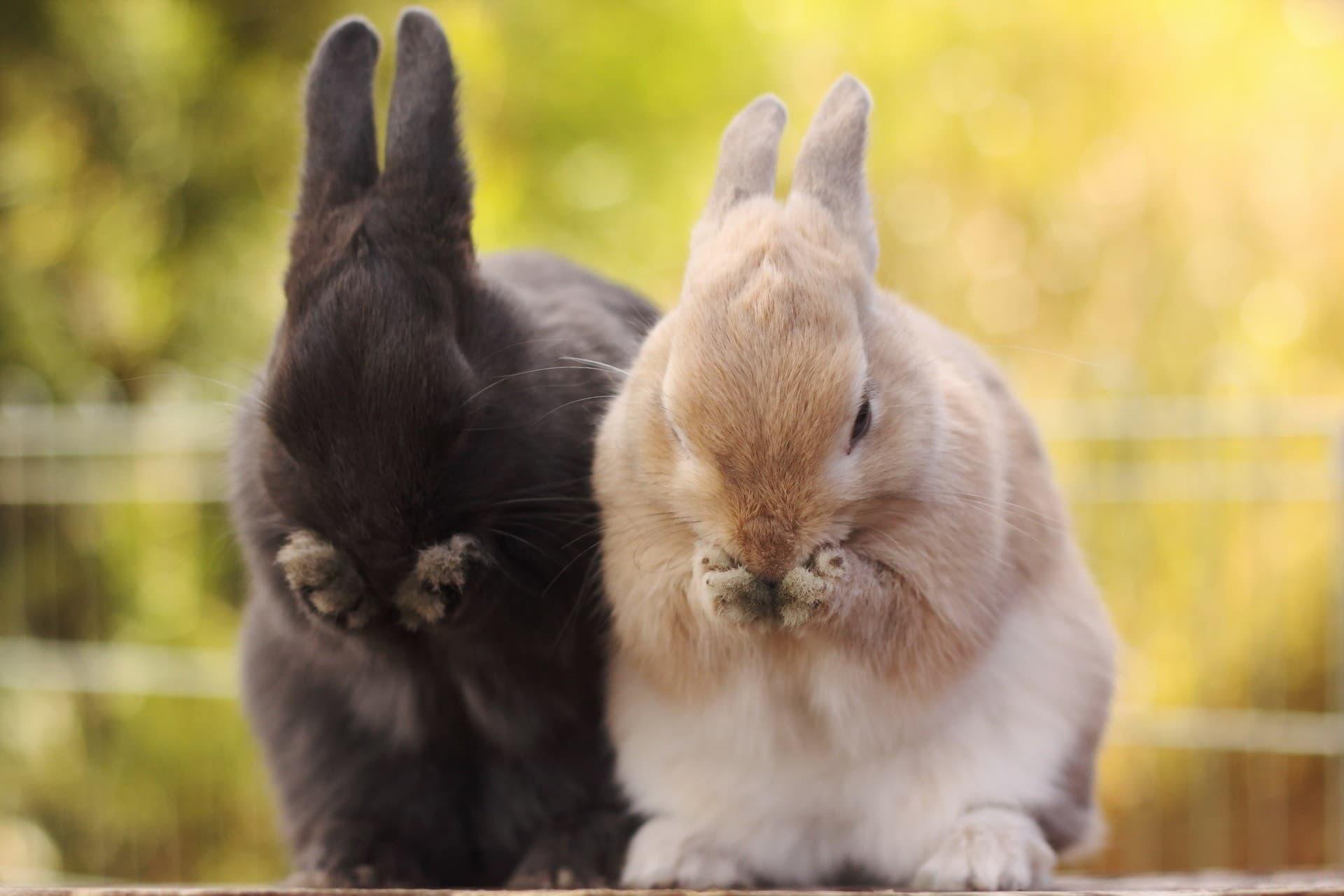 Как понять, что кролик заболел, и как его лечить