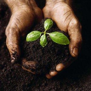 Готовим семена к посеву рассады: замачивание в растворе