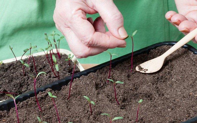 Выращивание рассады из семян в домашних условиях (с фото и видео)