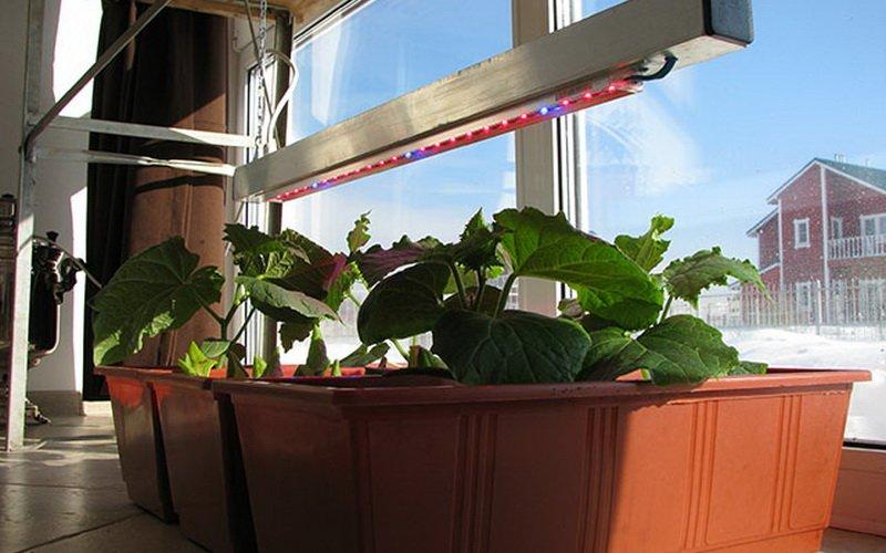 Как вырастить хорошую рассаду в домашних условиях и как за ней ухаживать